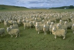 Look at all those Stupid sheep...Ohhh! I mean Voters!